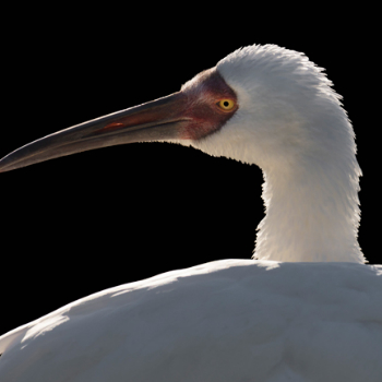 Portfolio of International Crane Foundation