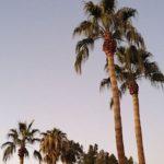 Webstix is Open in Arizona for Website Development/Projects and Maintenance
